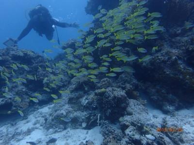 竹富島 ファンダイビング 体験ダイビング