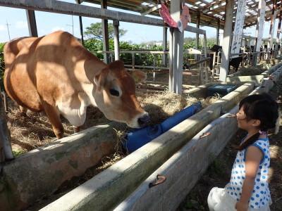 黒島 牛まつり