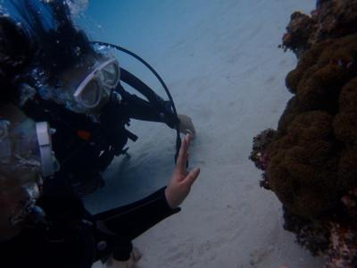 竹富島 体験ダイビング
