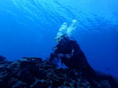 石垣島 ダイビング 海