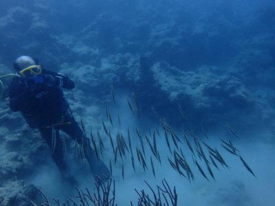 石垣島 ダイビング 魚 水中写真 海