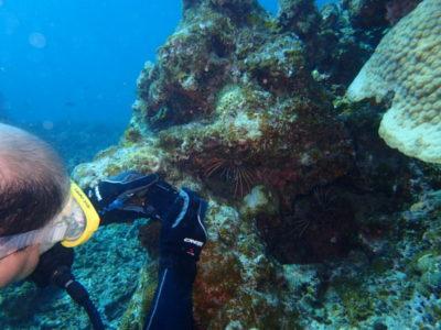 石垣島 ミノカサゴ ダイビング 海 水中写真