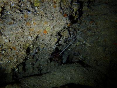 黒島 洞窟 イセエビ 海