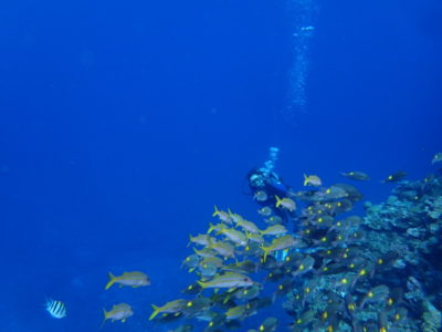 黒島 魚 ダイビング 海