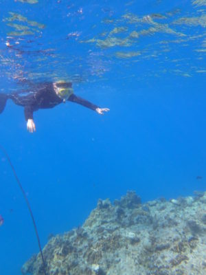 竹富島 シュノーケリング 体験ダイビング 海 魚