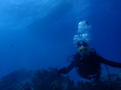 竹富島 体験ダイビング ダイビング 海