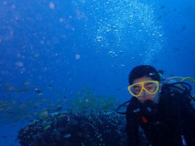 竹富島 体験ダイビング 魚 海 ダイビング