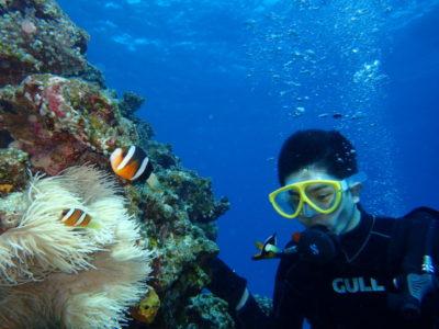 竹富島 体験ダイビング 海 クマノミ ダイビング