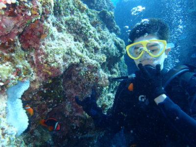 竹富島 体験ダイビング ダイビング 海 クマノミ