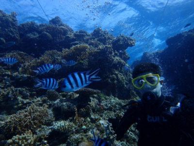 竹富島 体験ダイビング ダイビング スズメダイ 海
