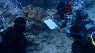 石垣島 体験ダイビング カクレクマノミ