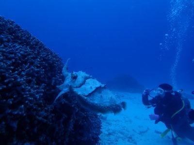 竹富島 ファンダイビング コブシメ 海