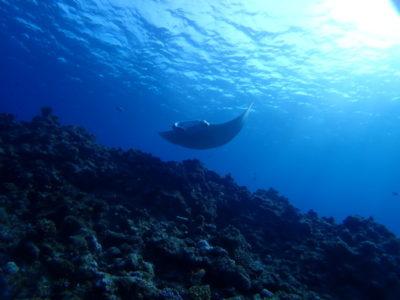 黒島 ダイビング マンタ